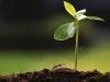 ambientalcontenido_marca
